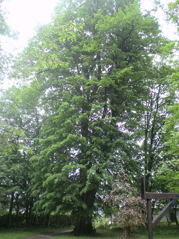 Baumpflege Detmold
