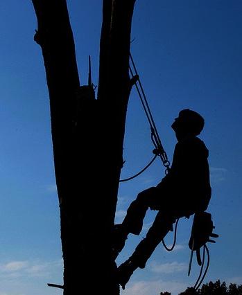 Baum Hebebühne Arbeiten