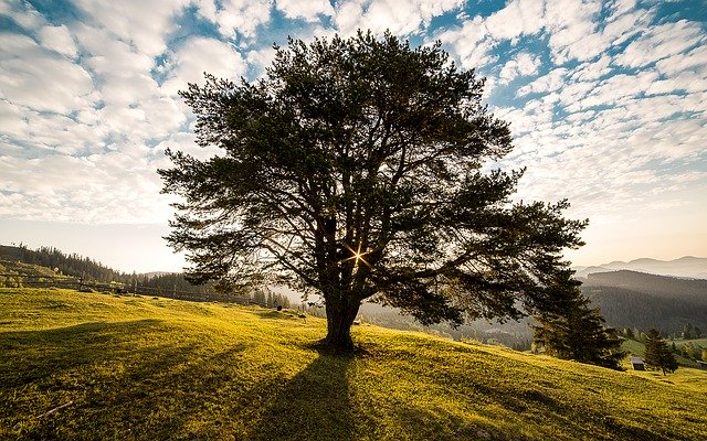 Baumpflege in Detmold