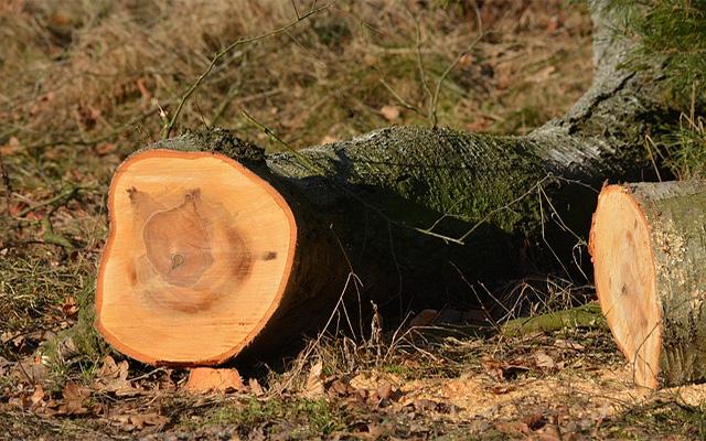 Baumfällung in Detmold