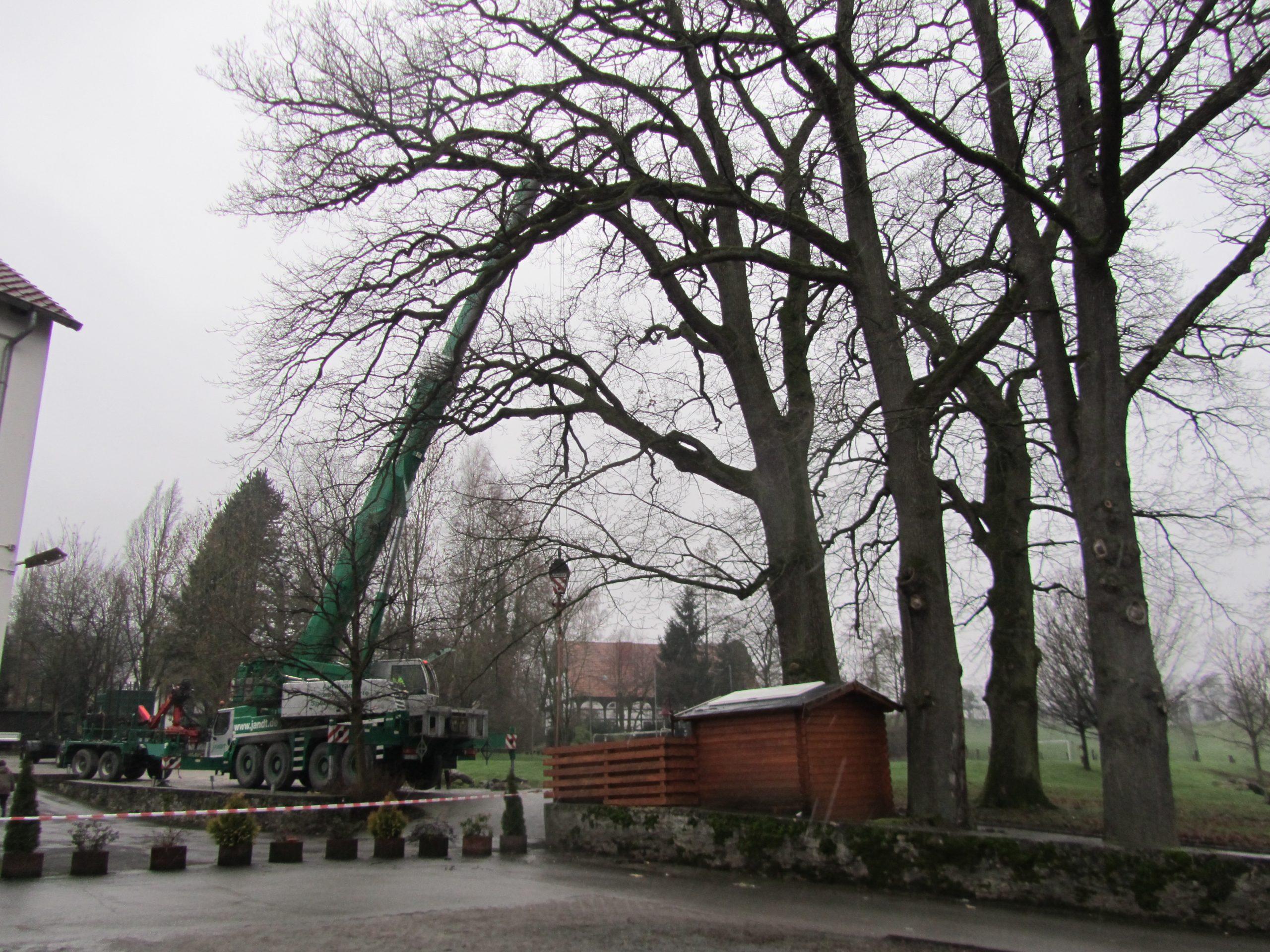 Bäume fällen Paderborn