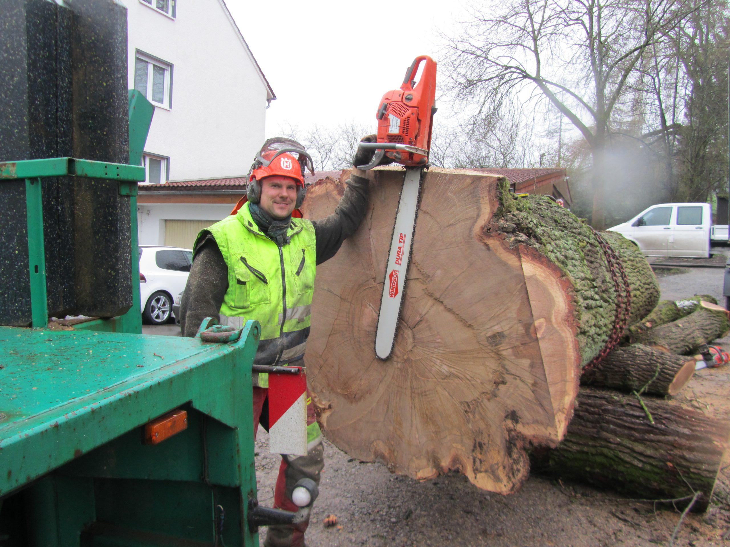 Baumfällarbeiten Rheda-Wiedenbrück