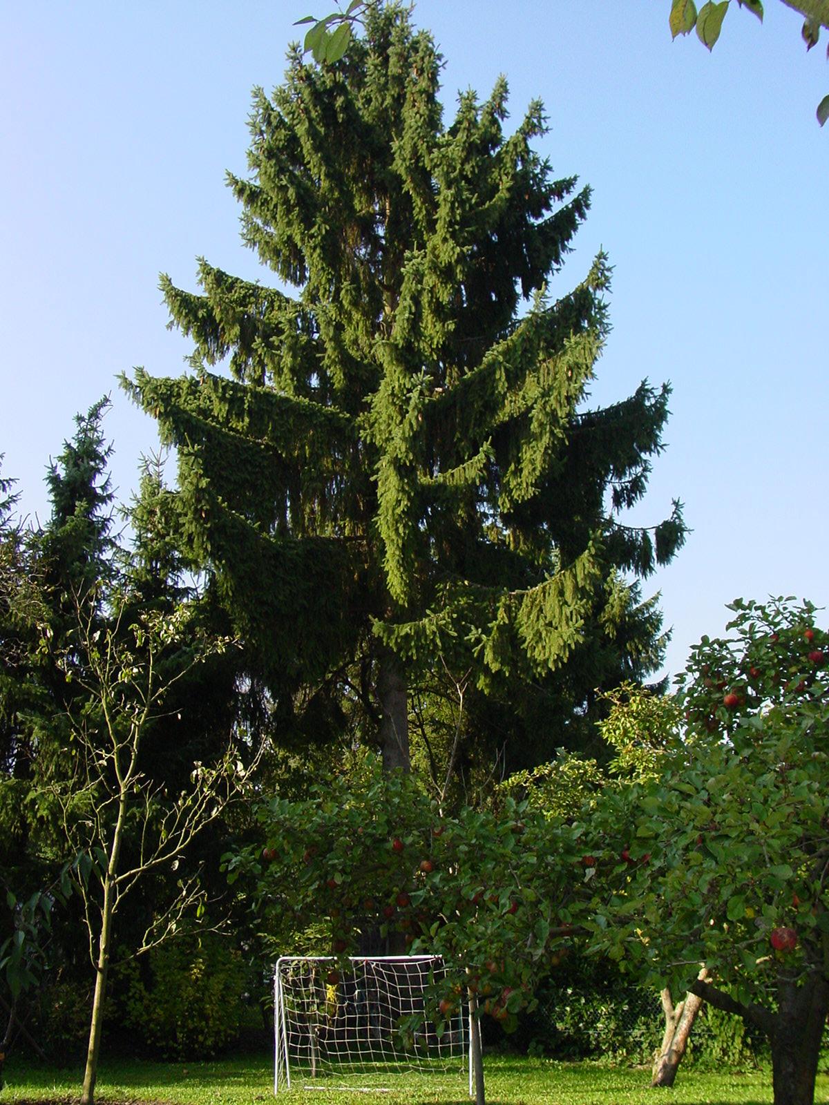Baumfällungen Herford