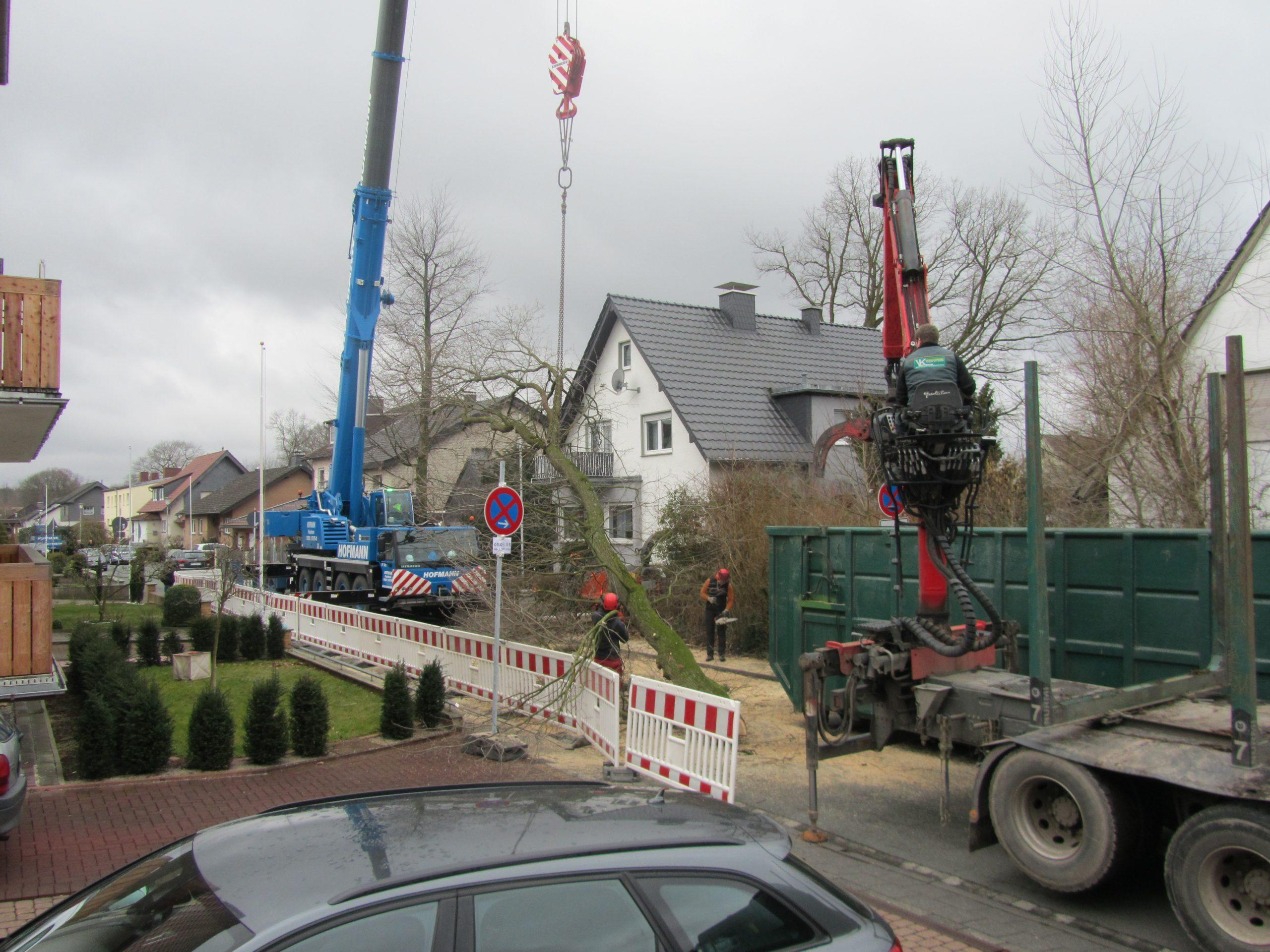 Bäume fällen Bielefeld