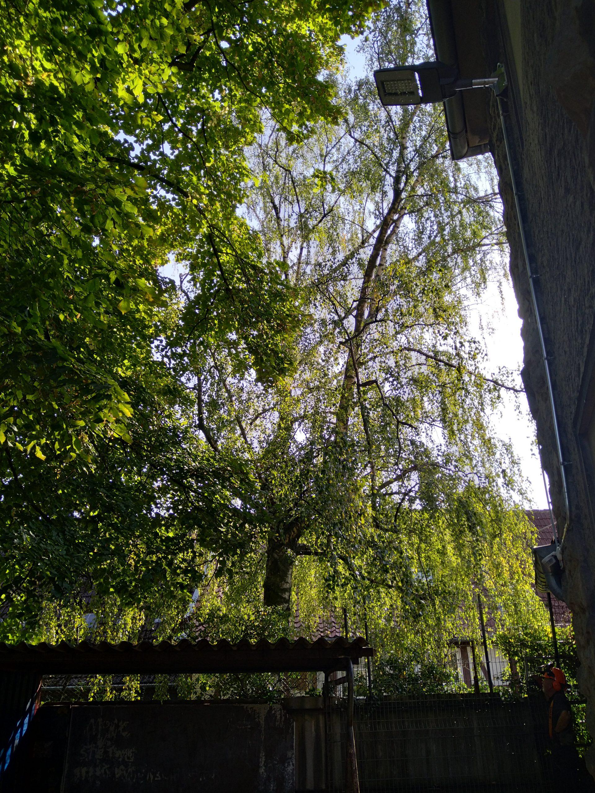 Bäume am Haus fällen Detmold
