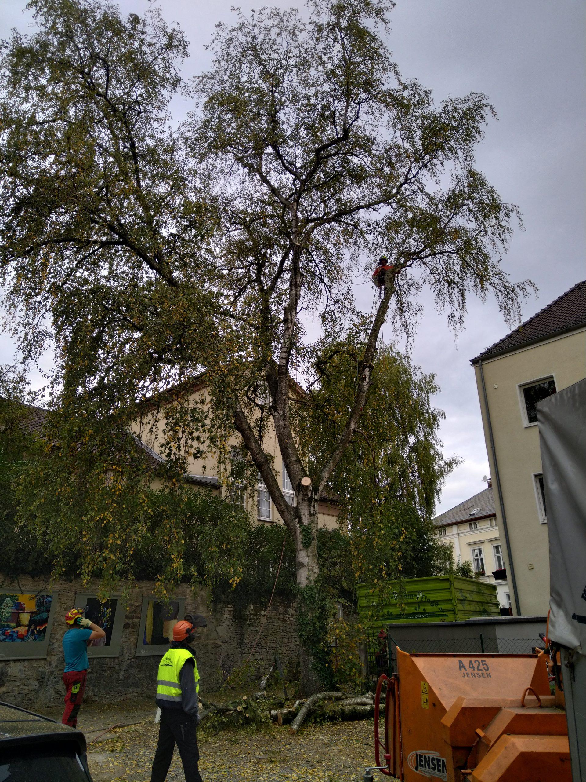 Abtransport Baum Rhedfa-Wiedenbrück