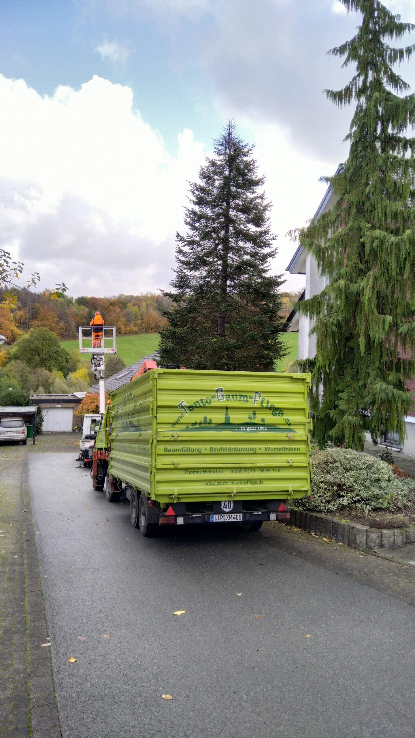 Fällarbeiten Detmold transport Baum