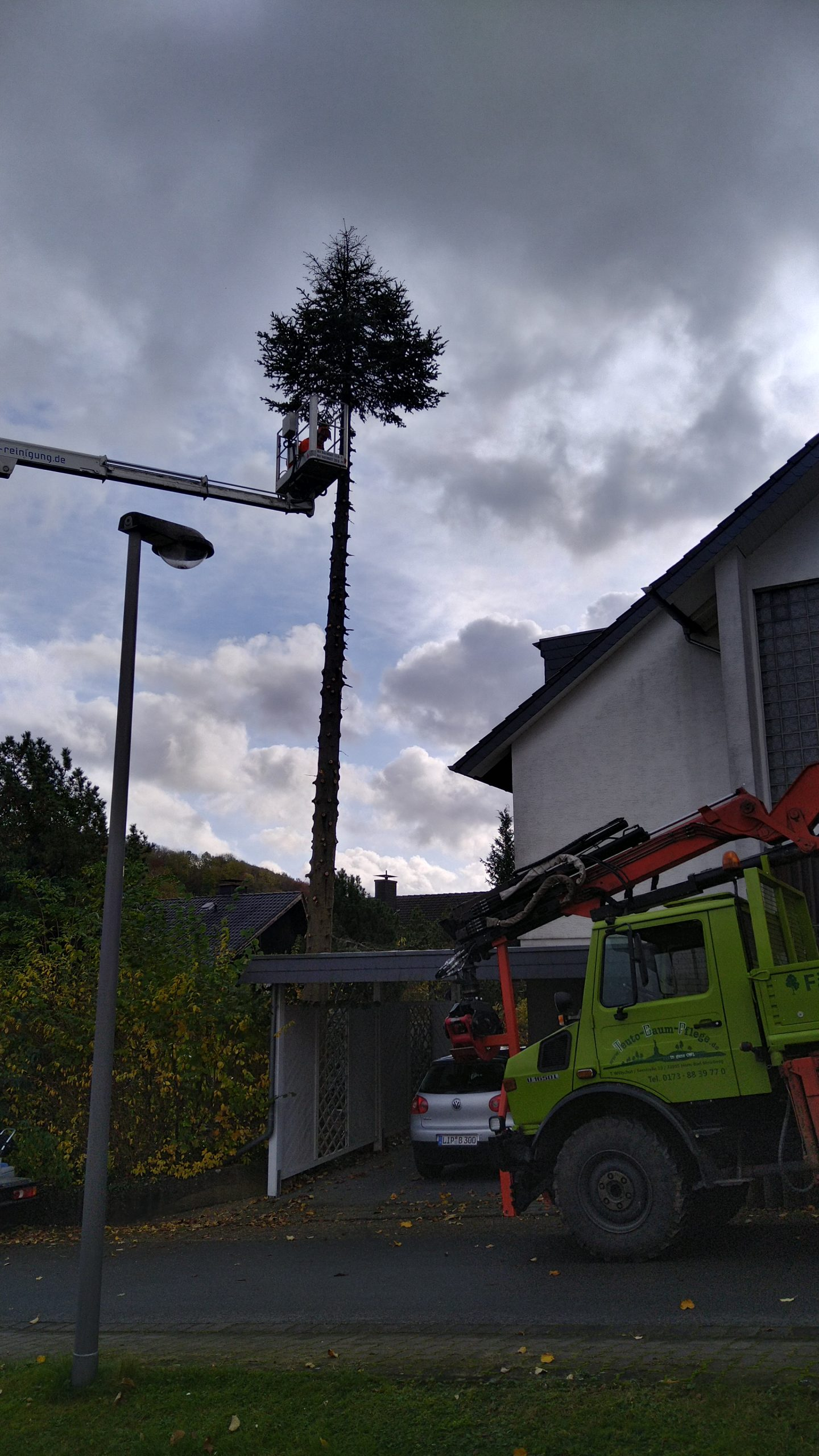 Abtransport Baum Detmold